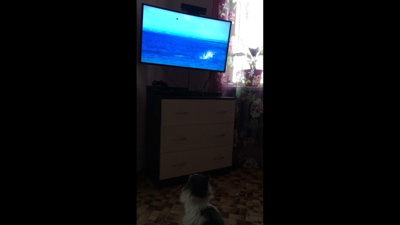 Мартин смотрит BBC Голубая планета 2