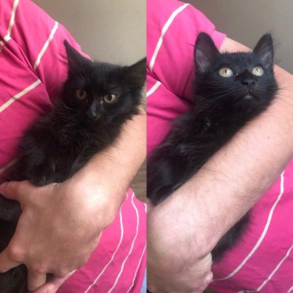 Опубликуйте пожалуйста 🙏🏻 Черные кошки - надежные энергетические защит