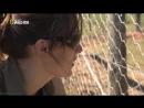 «Дикие сердцем Спасение цирковых львов» Документальный, природа, животные, 2007