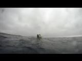 GoPro белые медведи