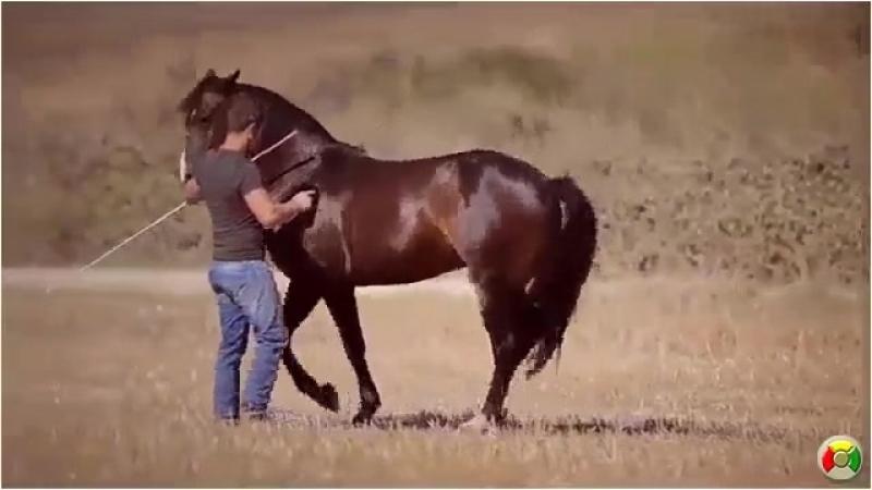 Красивая работа с лошадью