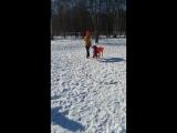Бустер. Переход на новый уровень в общении с собаками- первая игра. Ранее сильная агрессия ко всем собакам.
