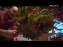 Познавательный фильм_ Как париться в бане с пользой для здоровья