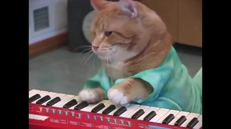 Keyboard Cat, Bento, A Tribute