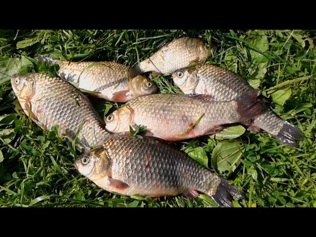 Очень простая и очень уловистая насадка для белой рыбы. Карась. Лещ. Плотва.