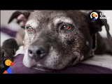 Dying Dog Gets The BEST Bucket List from Her Family The Dodo