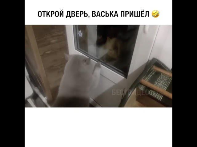 Открой дверь Васька пришел