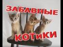 ЗАБАВНЫЕ И СМЕШНЫЕ КОШКИ, КОТИКИ, КОТЯТА и КОТЭ / Funny Kitties