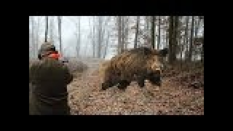 Hunting for wild boar great moments selection videos of real hunt