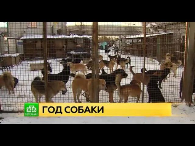 Собакам нужен дом: петербургские волонтеры рассказали истории о спасении четве ...