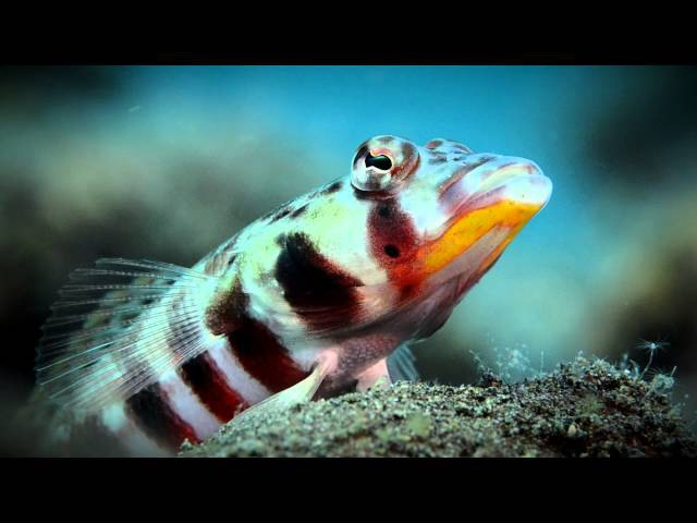 BALI CLOSE UP by Evan Sherman from USA - World ShootOut 2015 Video Clip Category - 1st prize