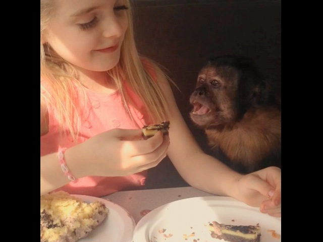 """Mckenna Grace on Instagram """"Monkey Monday! Here is another behind the scenes look at Mckennas favorite co-star! They ate lunch together everyday..."""