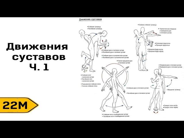 M22 Виды движений в суставах Ч1