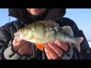 Ловля окуня на блесну зимой Как найти и поймать крупного окуня зимой