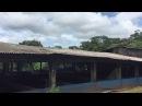 Curicacas no Telhado do Chiqueirão. São Lourenço DOeste, Brasil. IMG_3870. 44,6 MB. 15h09. 22dez17