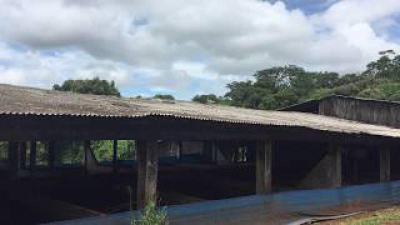 Curicacas: no Telhado do Chiqueirão. São Lourenço D'Oeste, Brasil. IMG_3870. 44,6 MB. 15h09. 22dez17