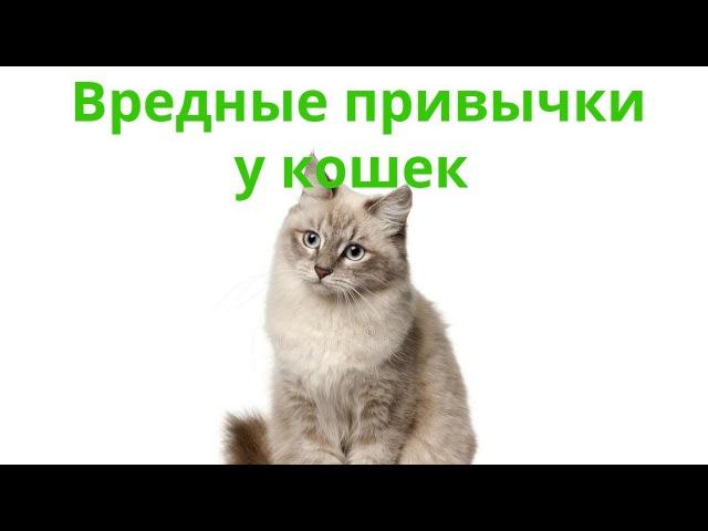 Вредные привычки у кошек. Ветеринарная клиника Био-Вет.