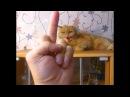 ШОК! Кот сбросил хозяина с 13 этажа! Не кликбейт !