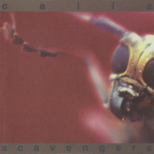 Calla альбом Scavengers