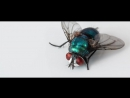 Tagesdosis 25.7.2017 - Sag mir wo die Fliegen sind