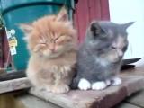 котята,соня,котэ,няша,ржака,прикол,ахаха,стеб,няшка,малыши,ржач :)