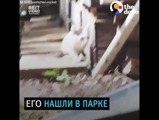 Котик по имени Ракета