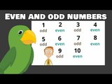 Even and Odd Numbers | 1st Grade and 2nd Grade Math Lessons