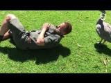 Собачка: Австралийская версия