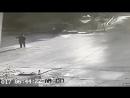 Fox attacks man, gets hurled