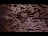 Elsiane. - Vaporous (Ext.-Digimax Galactic Voyage-Fan Mix By Marc Eliow)
