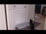 Кот открывает любые двери
