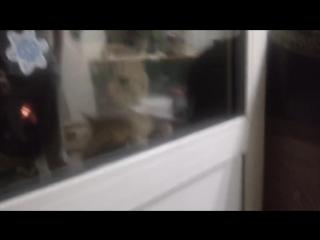 говорящий кот. Открой дверь