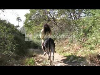 Escaped_Donkey