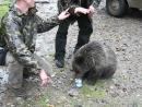 Геологи, медвежонок и сгущенка.