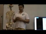 Анатомия и биомеханика плечевого пояса. Иван Десятских День 1 ч 4