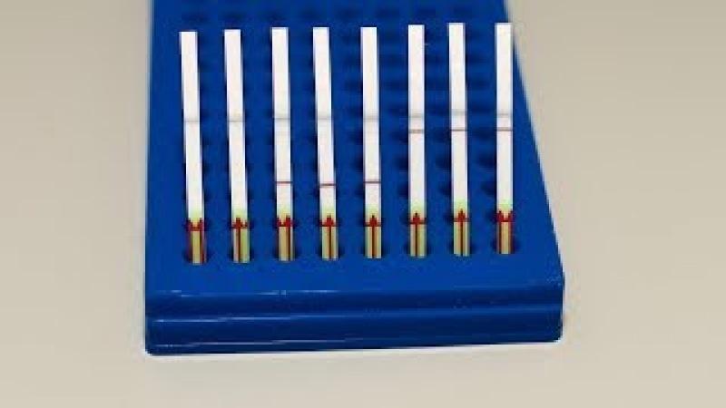 SHERLOCKv2: Detection results on a paper strip