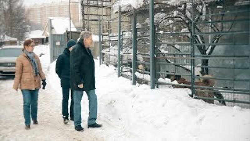 Григорий Явлинский: Жестокое обращение с животными — показатель состояния здоровья общества