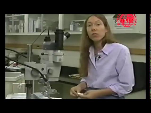 Инструментальное осеменение пчелиных маток со Сьюзан Кобей