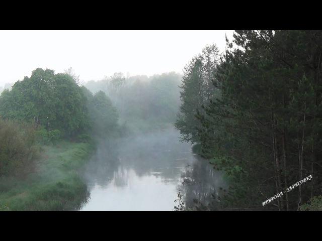 Природа. Лес. Река. Туман. Утро. Пение Птиц. Звуки природы. Нёман