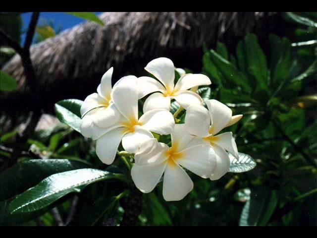 AONUA Whakaronga Listen and see