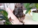 Удивительные амфибии Рогатые носатые чесночницы Адская лягушечка