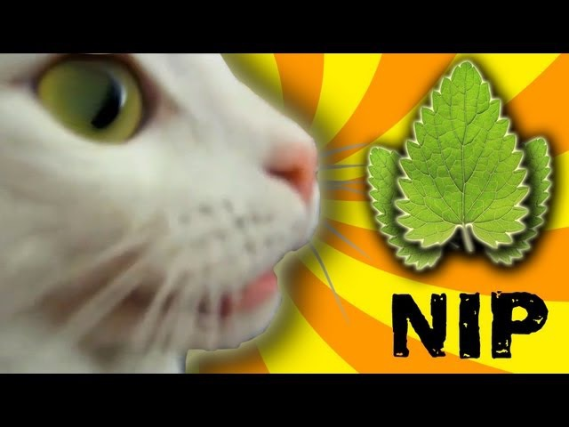 Cat Nip Trip
