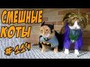 Смешные Кошки и Коты 2018 ДО СЛЁЗ Приколы с котами и кошками Funny Cats