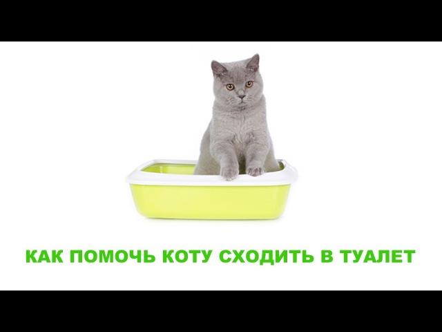 Как помочь коту сходить в туалет