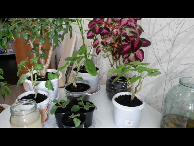 Удобрение из банановой кожуры для растений.