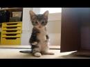 Котёнка с отклонением принесли на эвтаназию...