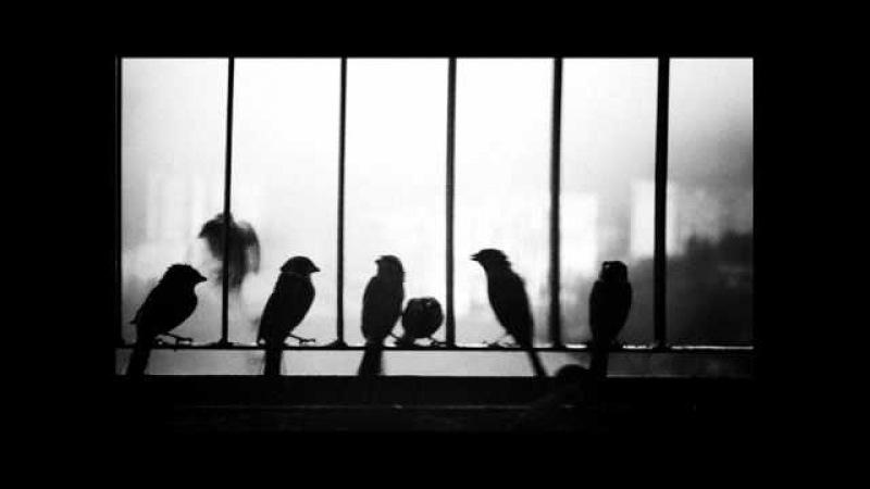 Current 93 - Falling Back In Fields of Rape » Freewka.com - Смотреть онлайн в хорощем качестве