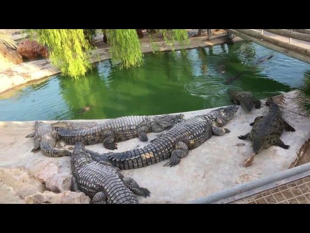 ★Тунис★о.Джерба★Часть 7★Кормление крокодилов★Крокодиловая ферма★Djerba Explore★Крокодилы★