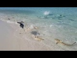 Shark Attack in Maldives Vacation! Best House Reef for Snorkeling 2018!