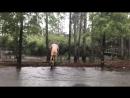 Aaron Ross Rain Ride